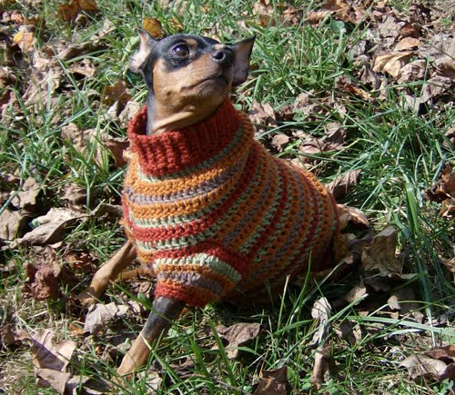 Free Crochet Dog Sweater Patterns - miniature pinscher